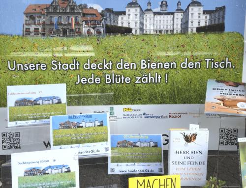 Lauter Bienenweiden in Bergisch Gladbach